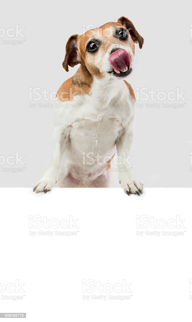Hungry puppy licking stock photo