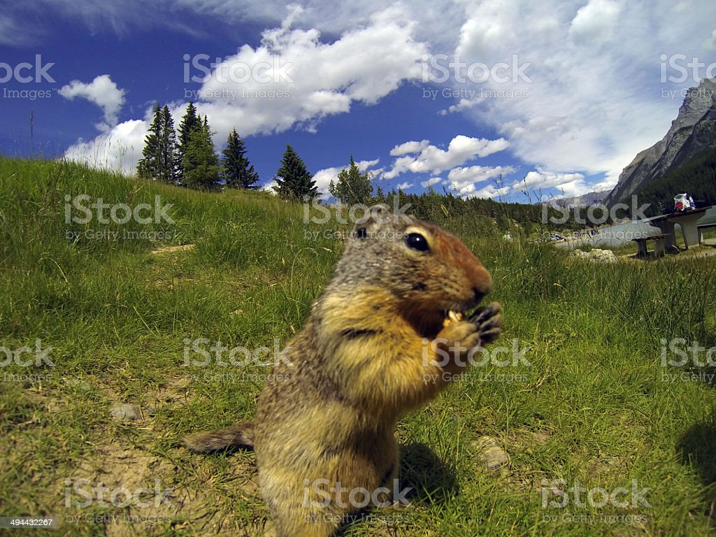 Hungry rodent stock photo