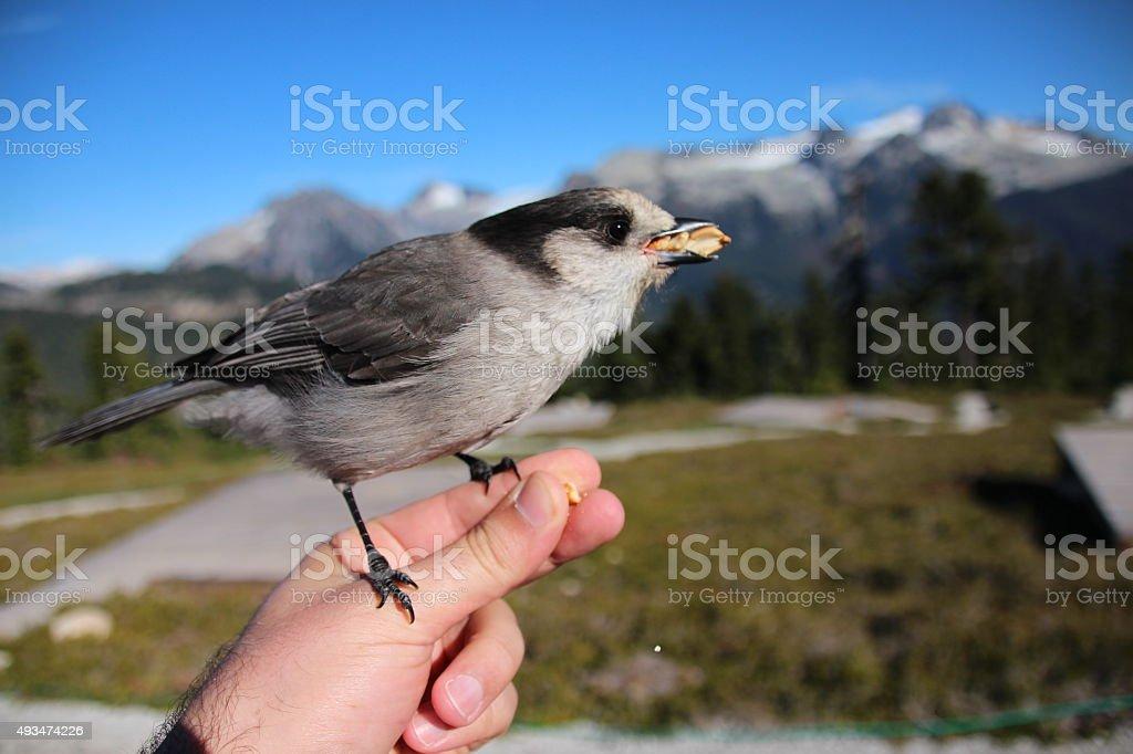 Hungry songbird stock photo