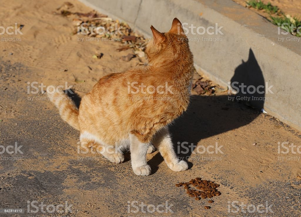 Hungry Street Cat Looks Backwards While Eating stock photo