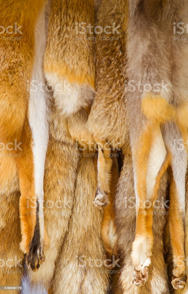 hunted hanging fox skins stock photo