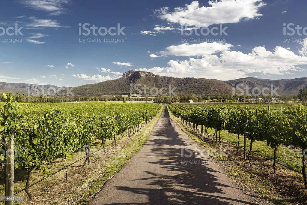 Hunter Valley vineyards stock photo