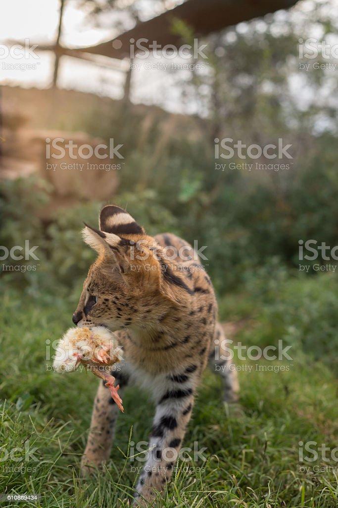 Hunter vs. hunted stock photo
