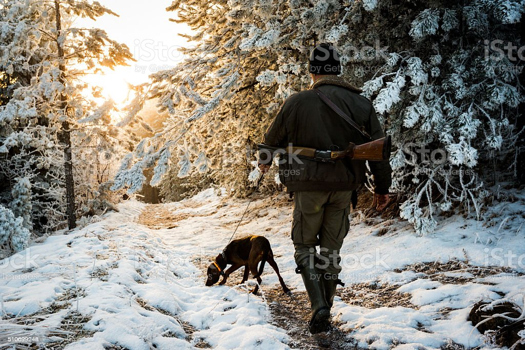 Hunter walking dog on the leash stock photo