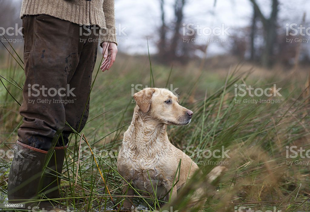 Hunter with a hunting dog stock photo