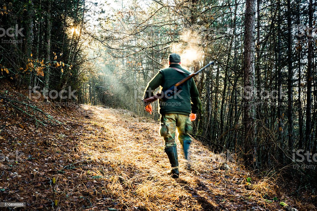 Hunter with rifle moving in the forest stock photo