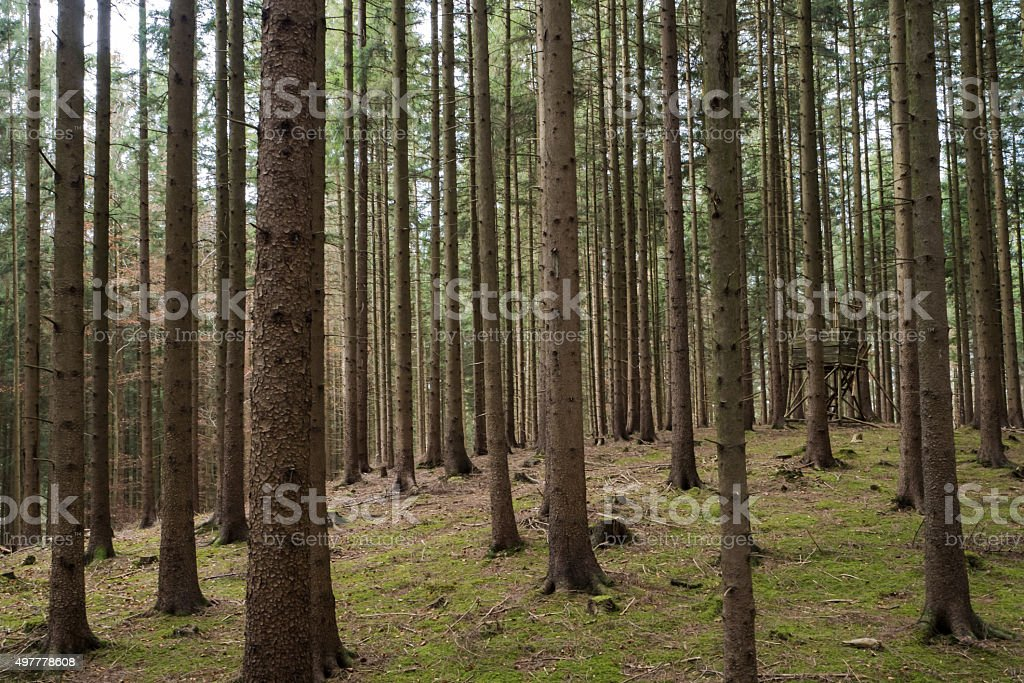 Hunter's forest stock photo