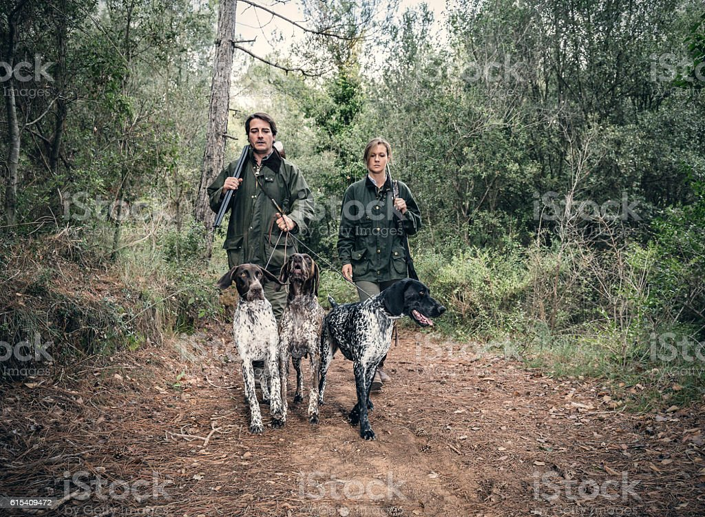 Hunters with German shorthaired Pointers stock photo