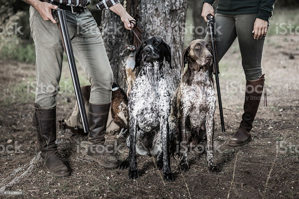 Hunters with purebreed dogs stock photo