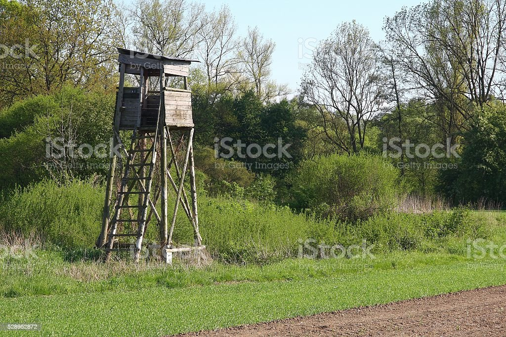 Hunting blind guards the field of corn stock photo