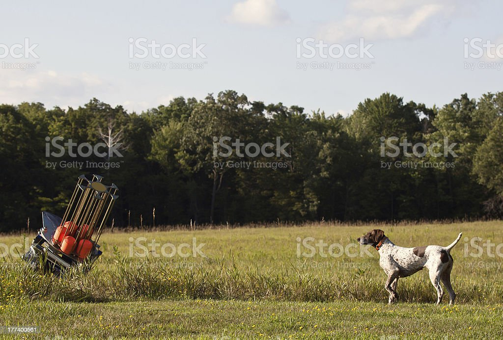 Hunting dog and clay pigeon thrower stock photo