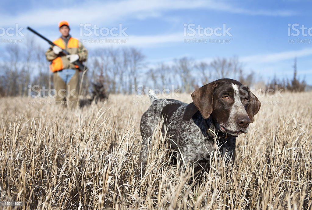 Hunting dog and man bird hunting stock photo