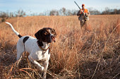 Hunting Dog and Man Upland Bird Hunting in Midwest Field.