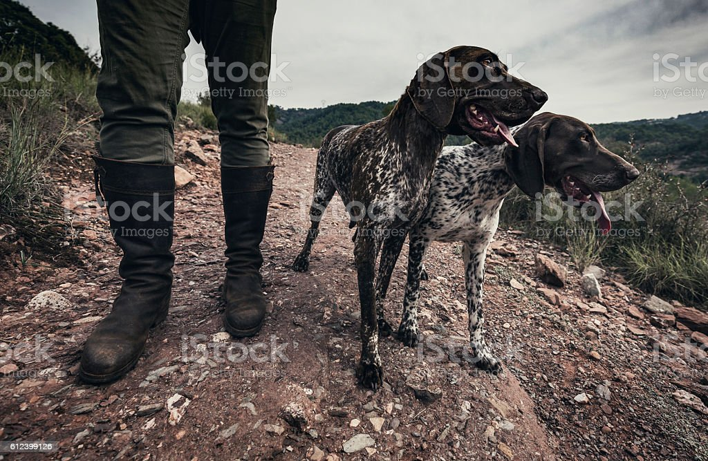 Hunting dogs stock photo