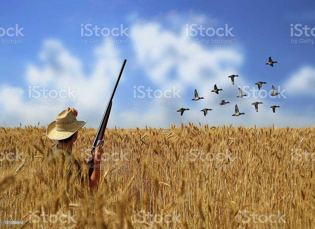 Hunting ducks stock photo