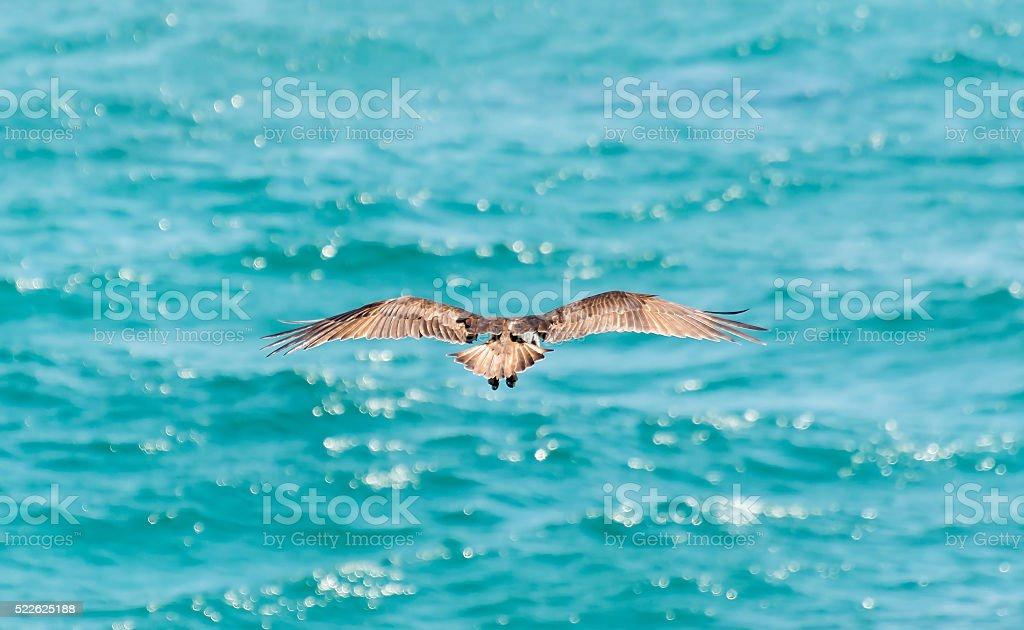 Hunting Eagle stock photo