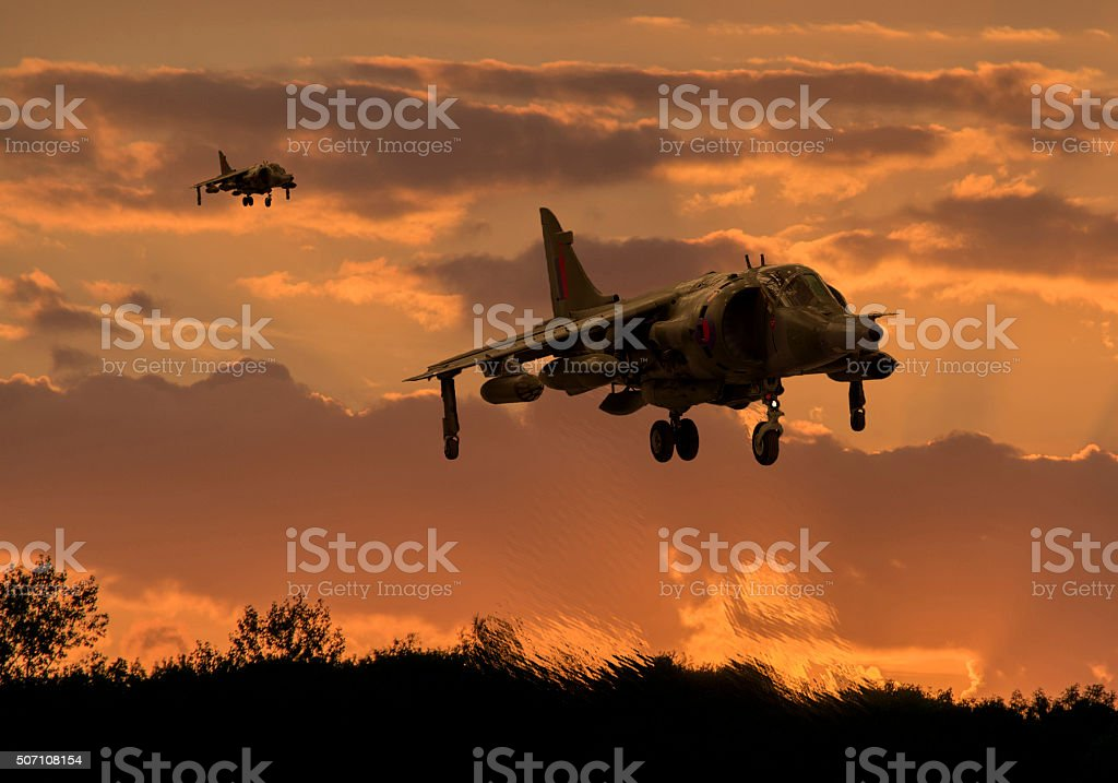 Hunting Harriers stock photo
