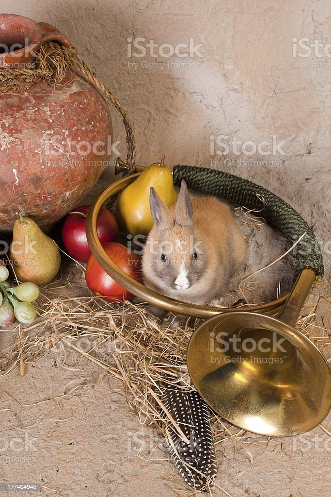 Hunting horn and rabbit royalty-free stock photo