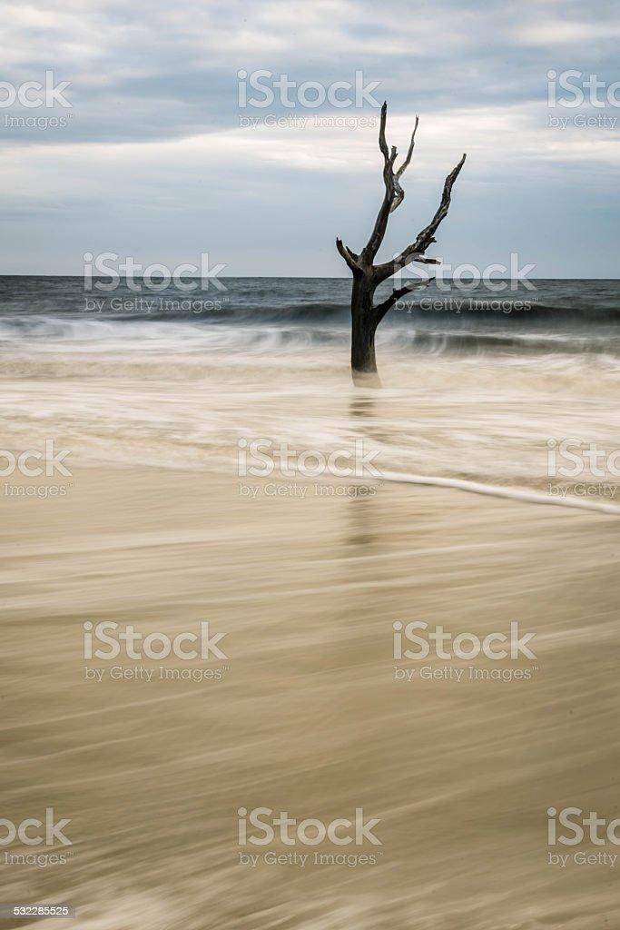 Hunting Island Skeleton Tree stock photo