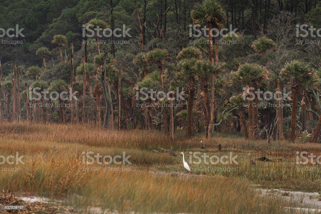 Hunting Island White Egret stock photo