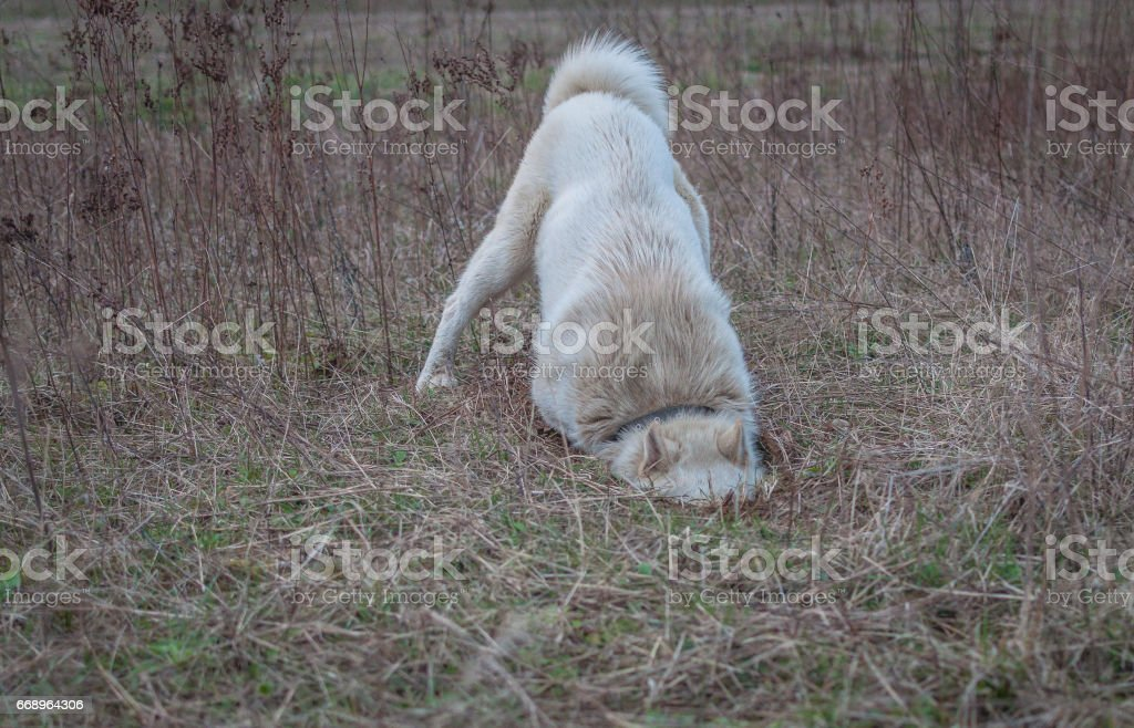 Hunting stock photo