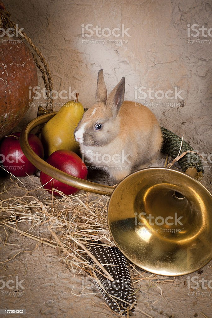 Hunting scene and live rabbit royalty-free stock photo