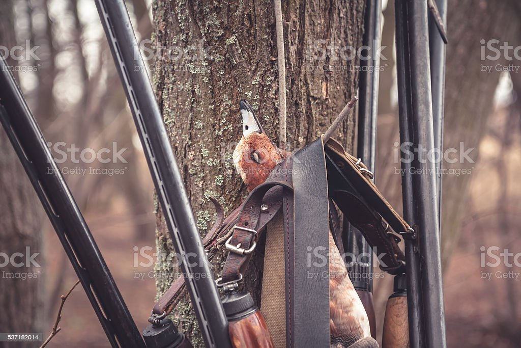 Hunting shotguns hanging on tree with prey after successful hunt stock photo