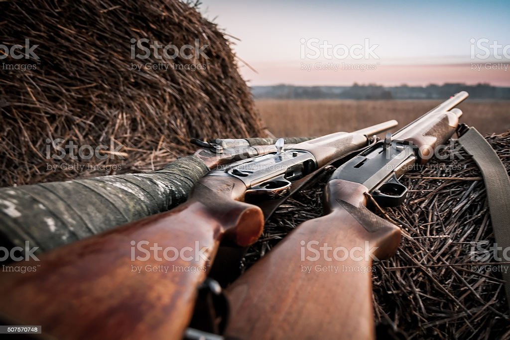 Hunting shotguns on haystack during sunrise in expectation of hunt stock photo