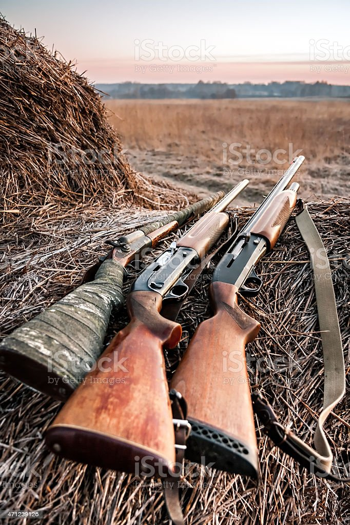 Hunting shotguns on haystack while halt stock photo