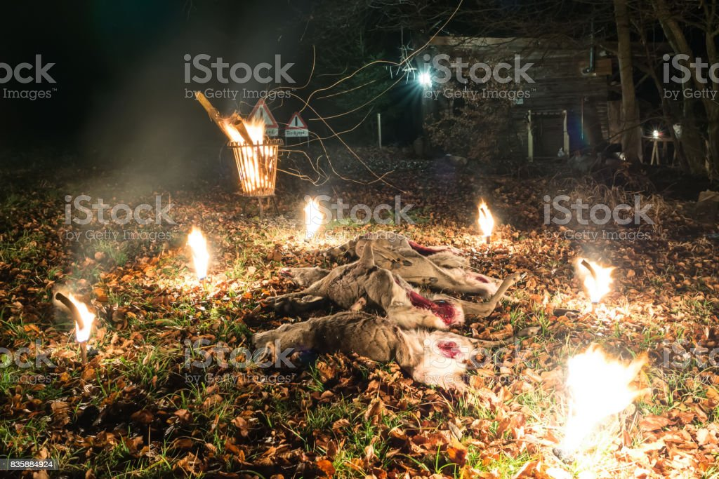Hunting stretch with roe deer stock photo