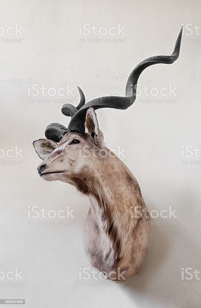Hunting Trophy royalty-free stock photo