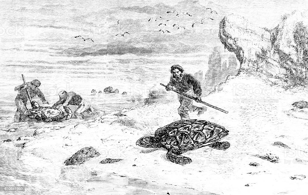 Hunting Turtle Hand drawn illustration stock photo