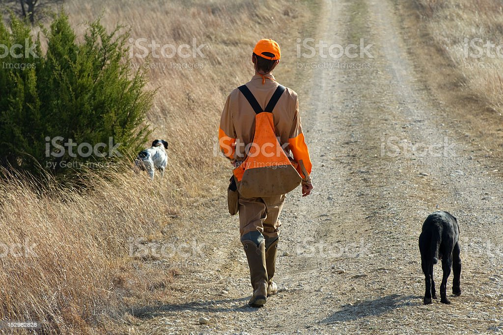 Hunting with dogs. stock photo
