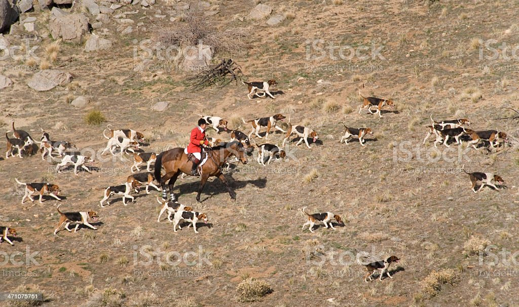 Huntmaster leads foxhounds across hillside stock photo