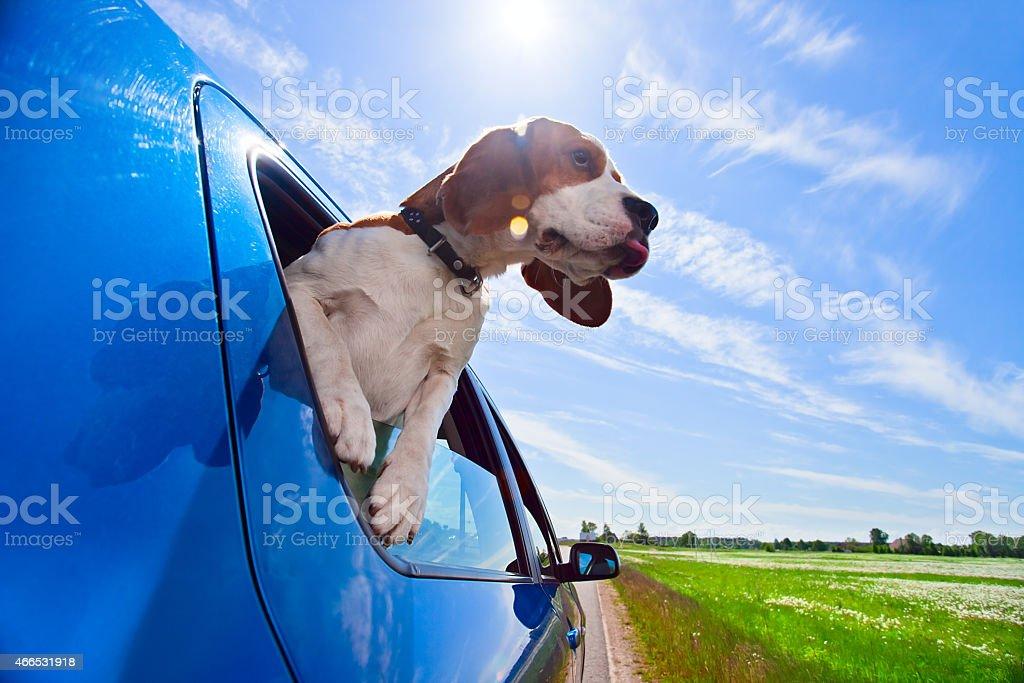 Hurrah! A vacation! stock photo