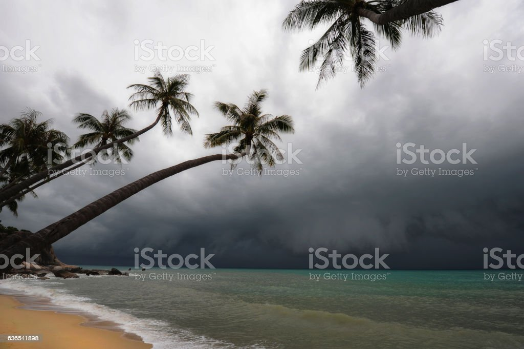 Hurricane is approaching at the beach stock photo