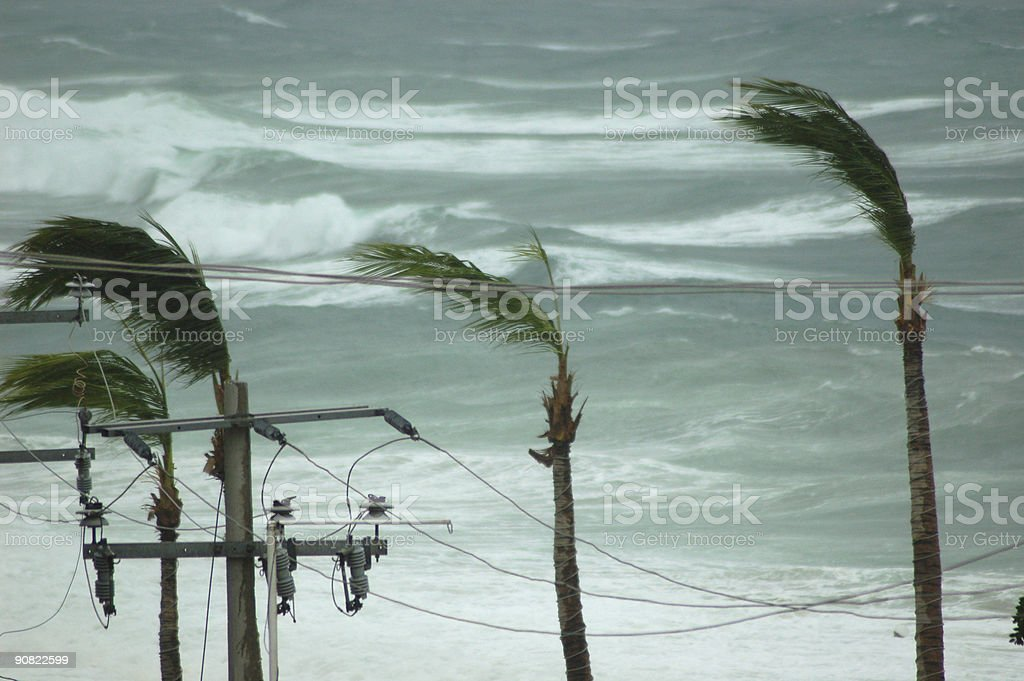 Hurricane Palms and Power royalty-free stock photo