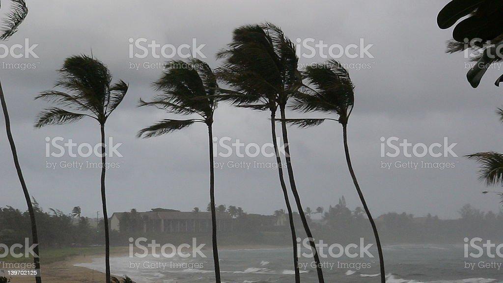 Hurricane Palms stock photo