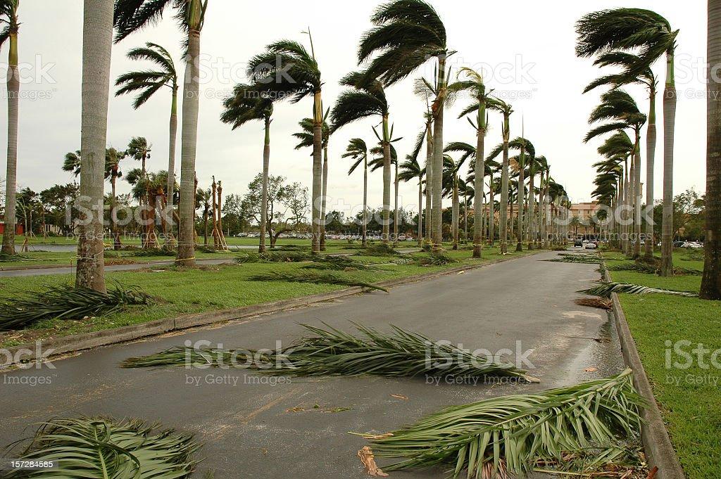 hurricane palms royalty-free stock photo