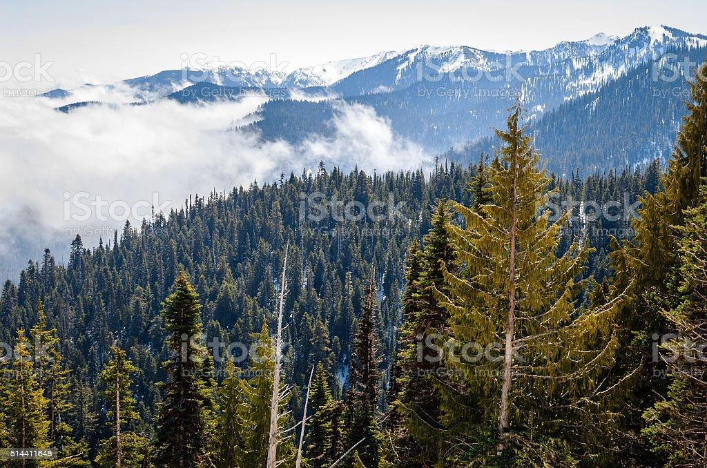 Hurricane Ridge, Olympic National Park stock photo
