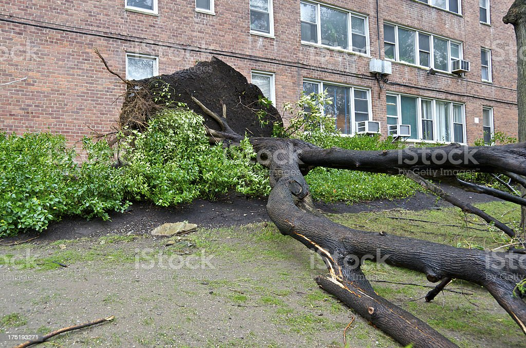 Hurricane Sandy aftermath, Fallen tree at apartment building, Bronx, NYC stock photo