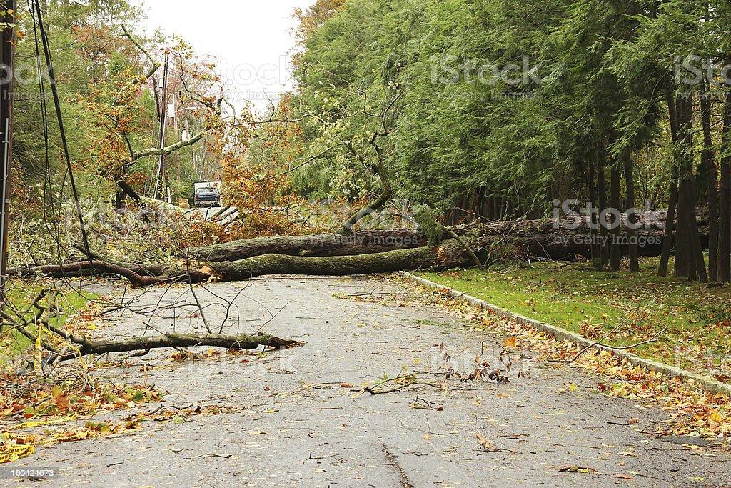Hurricane Sandy Storm Tree and Power Line Damage stock photo