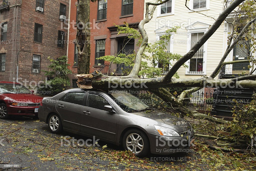 Hurricane Sandy tree down on car in Brooklyn stock photo