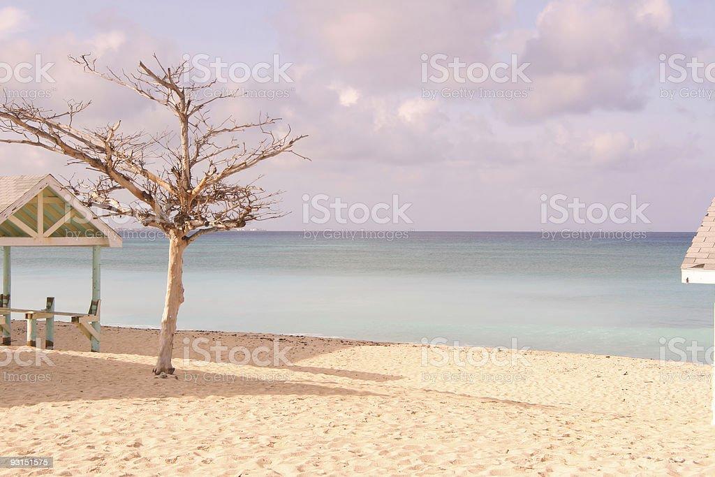 Hurricane striped tree stock photo