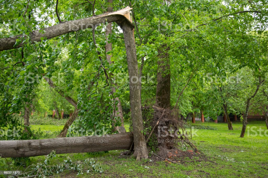 Hurricane - turned out tree stock photo