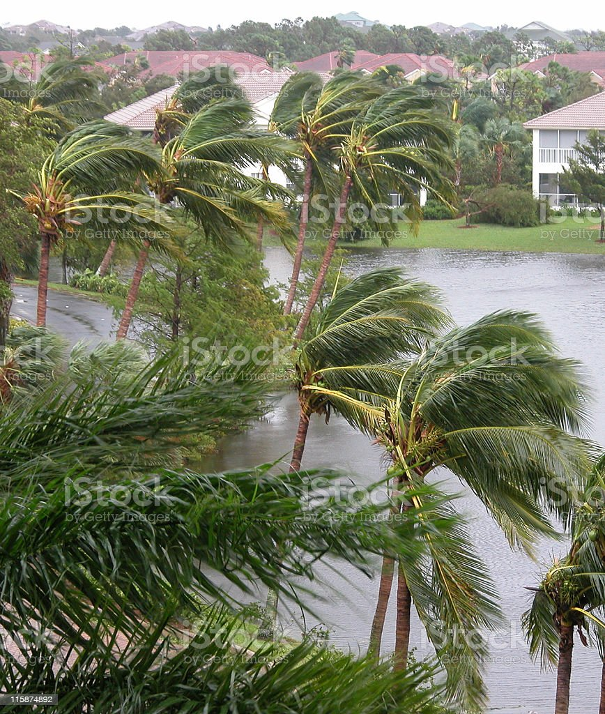 Hurricane winds in Palms stock photo