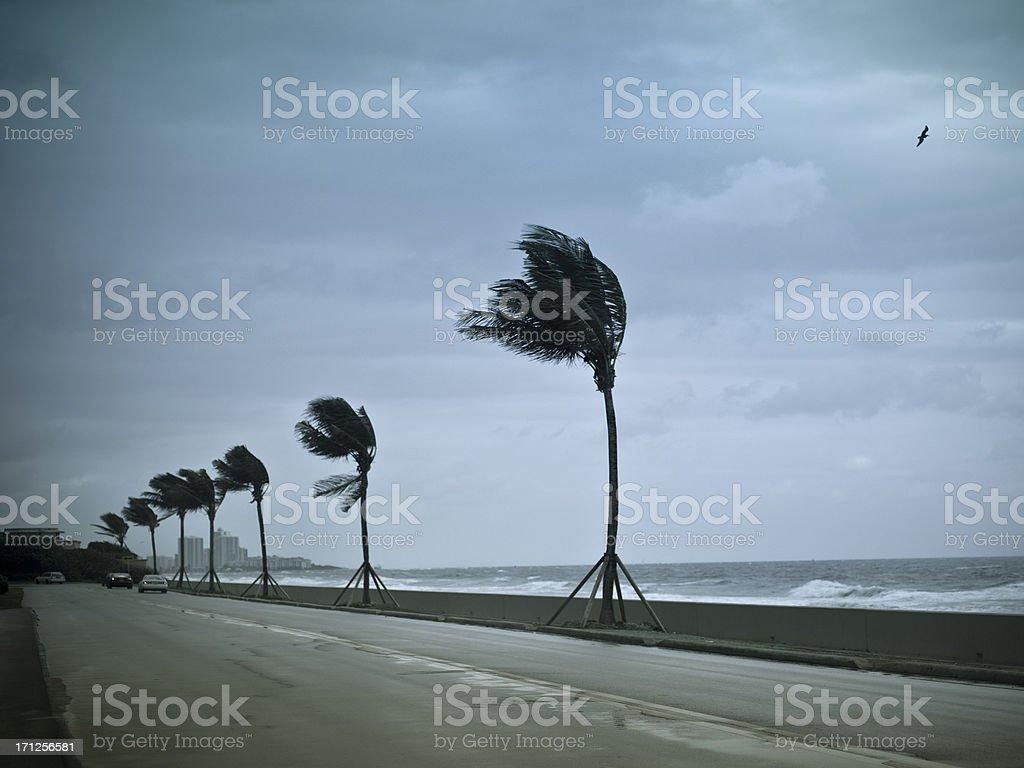 Hurricane winds pound the shore stock photo