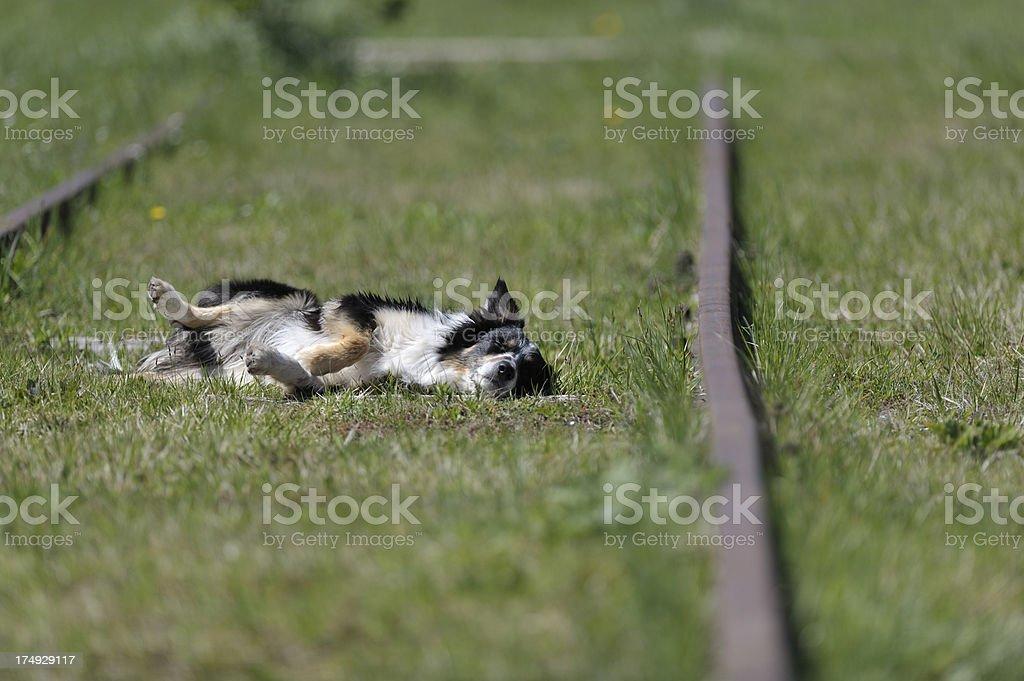 Hurt dog laying down stock photo