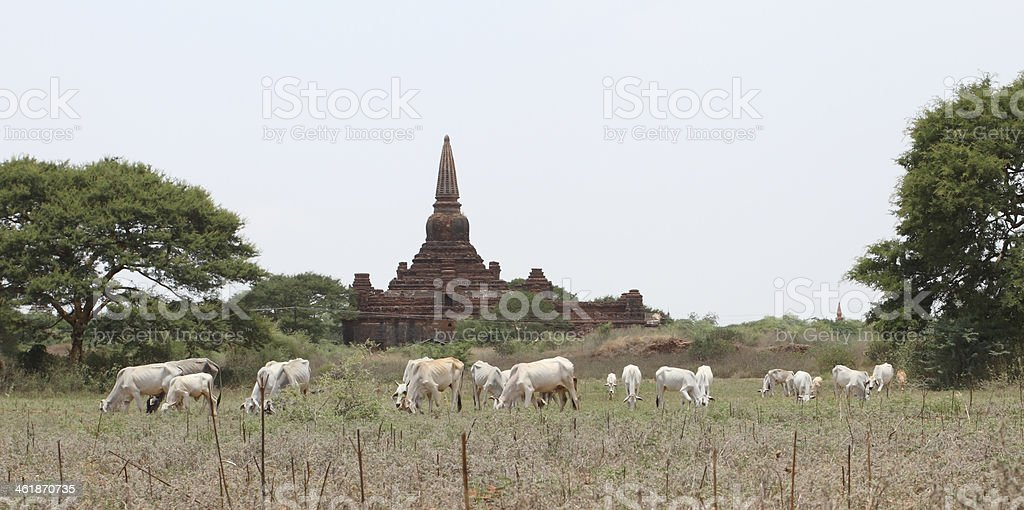 husbandry and pagoda stock photo