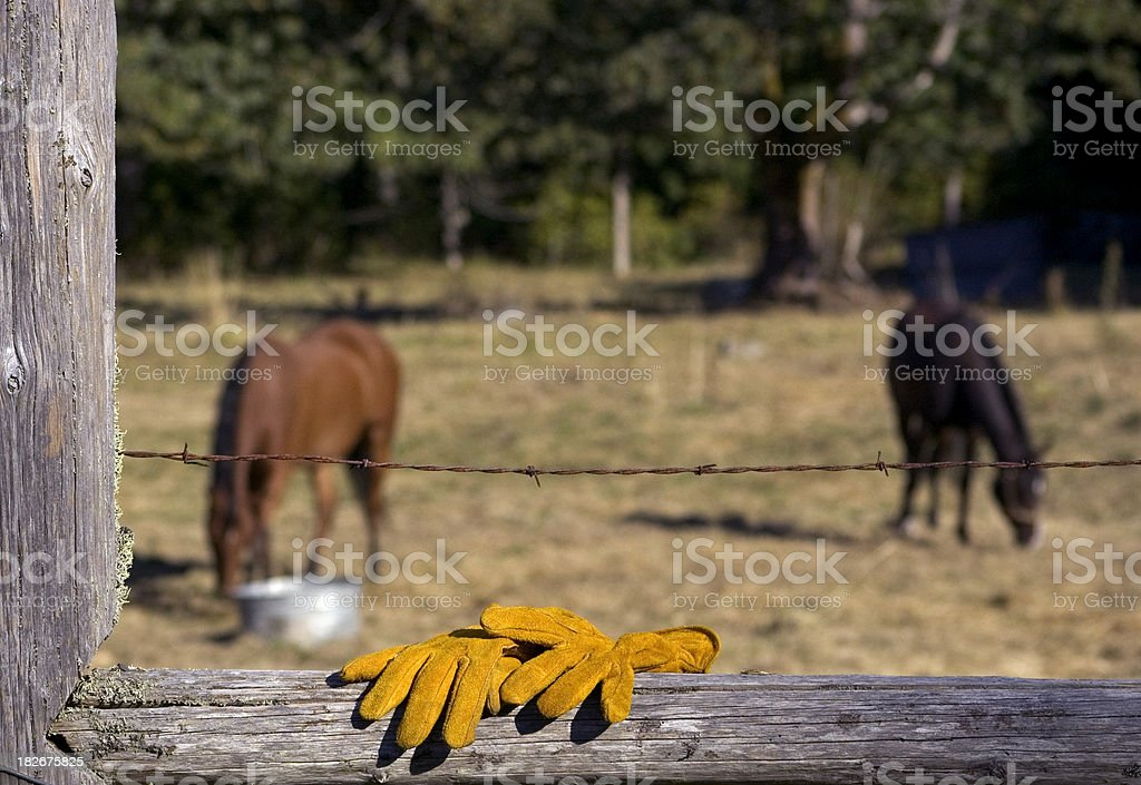 Husbandry stock photo